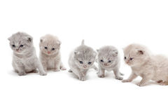 Small kittens. Little kittens are sitting in a row Royalty Free Stock Image