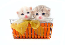 Small kittens in a basket Royalty Free Stock Image