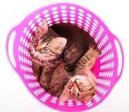 Small kittens in a basket Stock Photo