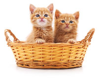 Small kittens in a basket. Small kittens in a basket on a white background stock images