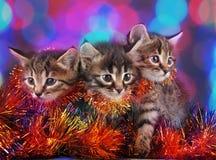 Small kittens among Christmas stuff Stock Image