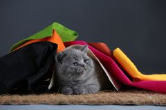 Small kittens covered with a multi color clothes, copy space stock image