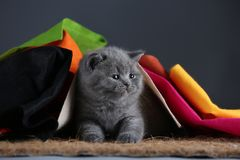 Small kittens covered with a multi color clothes, copy space stock photography