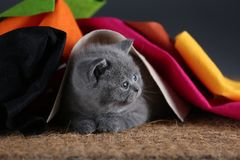 Small kittens covered with a multi color clothes, copy space royalty free stock photos