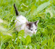 Small kittens on the green grass Royalty Free Stock Image