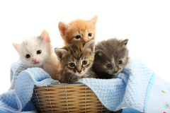 Small Kittens In Straw Basket Stock Image