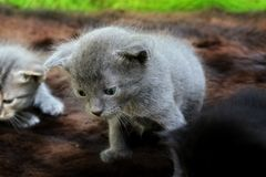 Small kittens out for the first time outside Royalty Free Stock Images