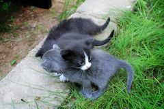 Small kittens out for the first time outside Stock Photos