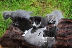 Small kittens out for the first time outside Royalty Free Stock Photography