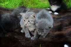 Small kittens out for the first time outside Stock Image