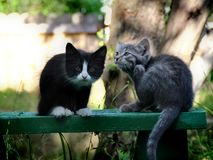 Small kittens out for the first time outside Royalty Free Stock Image