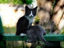 Small kittens out for the first time outside Royalty Free Stock Photo