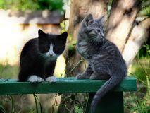 Small kittens out for the first time outside Stock Photo