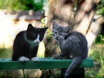 Small kittens out for the first time outside Royalty Free Stock Photos