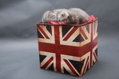 Small kittens in a photo studio Royalty Free Stock Photography