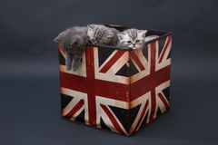 Small kittens in a photo studio Royalty Free Stock Image