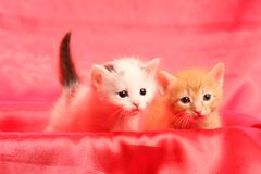 Small kittens on red Royalty Free Stock Images
