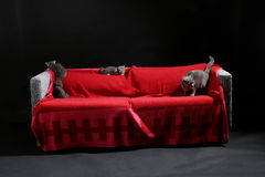 Small kittens on sofa Stock Photography