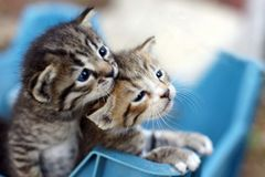 Small greek kittens on Zakynthos island Royalty Free Stock Image