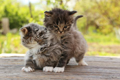 Small kittens. On table outdoors stock photography
