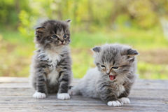 Small kittens. On table outdoors royalty free stock photography