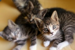 Small kittens. Stock Photography