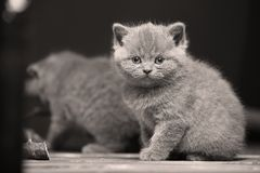 Small kittens on a wooden background,