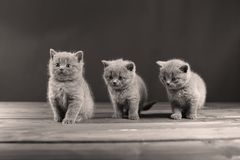 Small kittens on a wooden background, isolated