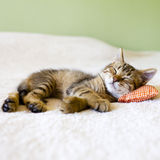 Small Kitty Stock Images