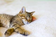 Small Kitty Stock Photo