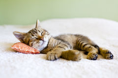 Small Kitty Royalty Free Stock Photos