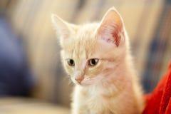 Small Kitty Stock Photos