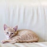 Small Kitty Royalty Free Stock Photography