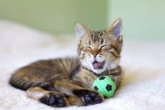 Small Kitty Royalty Free Stock Photos