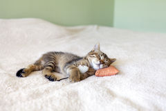 Small Kitty Royalty Free Stock Images