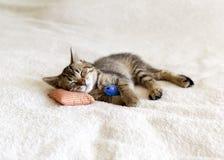 Small Kitty Stock Photography