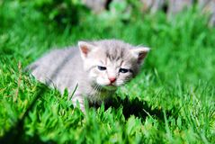 Small Kitty Royalty Free Stock Photography