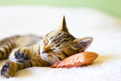 Small Kitty Stock Photography