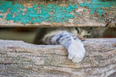 Small kitty leg through old wooden door hole Royalty Free Stock Images