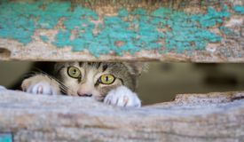 Small kitty through old wooden door hole Royalty Free Stock Photo