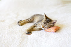 Small Kitty With Red Pillow Stock Photos