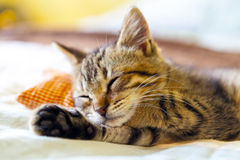 Small Kitty Royalty Free Stock Photo