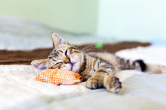Small Kitty Royalty Free Stock Image