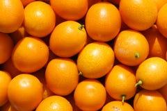Small kumquat Royalty Free Stock Images