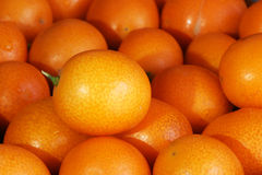 Small kumquat Royalty Free Stock Photo