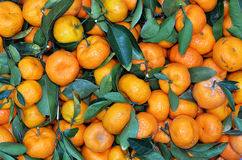 Small Kumquat, Asian small orange Stock Photos