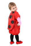 Small ladybird Stock Images