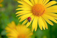 Small ladybug Stock Photo