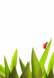 Small ladybug. On green grass isolated on white Stock Images