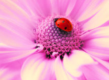Small ladybug Royalty Free Stock Photo